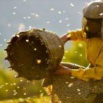 Kočárkino: Země medu